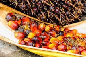 Olej palmowy: czy powinniśmy go unikać?