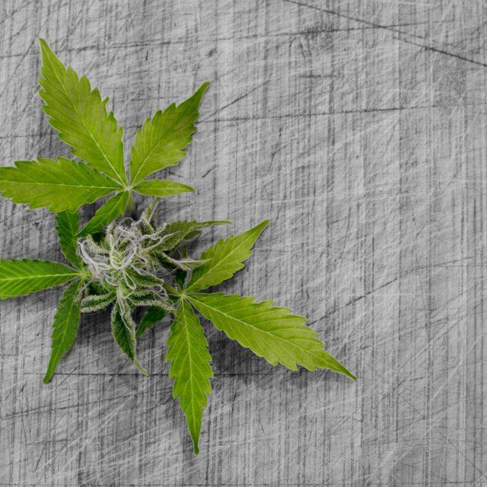 """Dr Jerzy Jarosz: """"Trudno nam zaakceptować marihuanę jako lek"""""""
