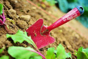 Praca w ogródku – aktywność fizyczna i poprawa kondycji psychicznej