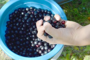 Read more about the article Aronia – polskie superfood, które leczy